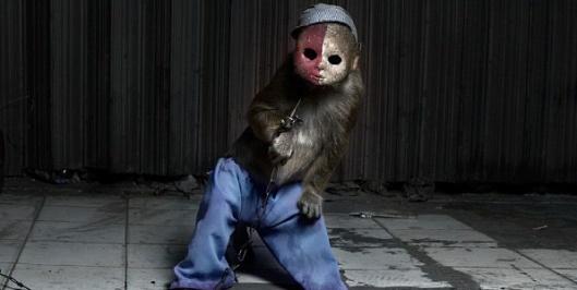 boxed-monkey-4