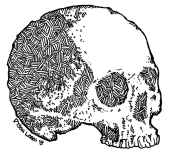 056 - Skull Variations 2 150