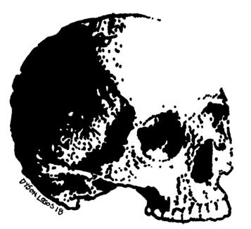 057 - Skull Variations 3 150