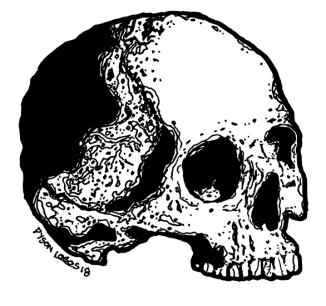 059 - Skull Variations 5 150