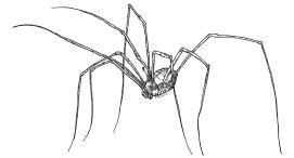 093 - Spider Cavalry 150